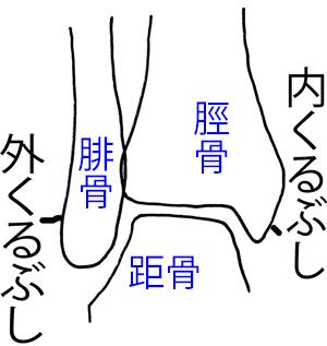 足関節 構造