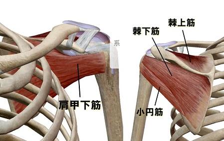 肩関節を安定させる4つの筋肉