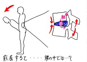 前屈時の腰椎